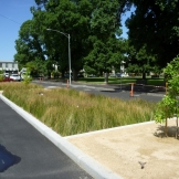 6. Darling st Completed project with Biofilta beds in the middle of the road (Medium)