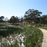 The treatment wetland during the establishment phase