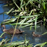 The wetlands are a biodiversity hot spot in inner Melbourne.