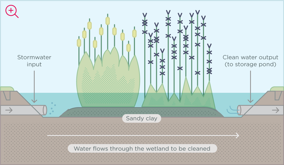 Wetland plants help to remove pollution from the water as it flows past.