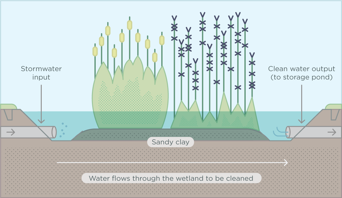 12981-CoM-Constructed-wetlands-infographic-1090px_21[1]