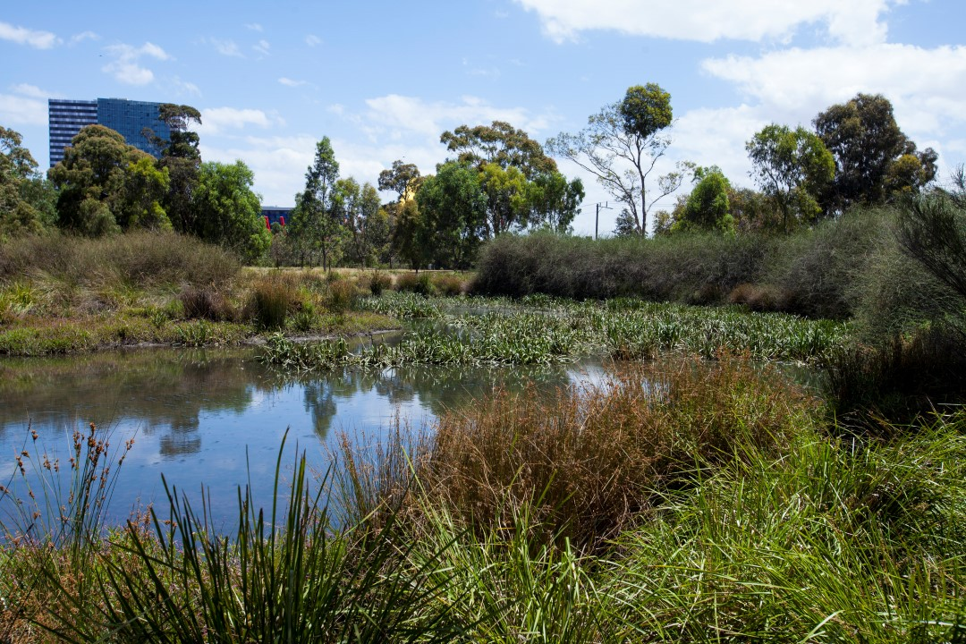 Constructed Wetlands City Of Melbourne Urban Water